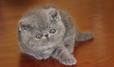 We have kittens. 5 wonderful babies!
