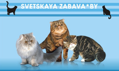 "LUCKY YEAR for the cattery ""SVETSKAYA ZABAVA""*BY !"